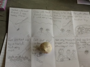 Life Story of Garlic